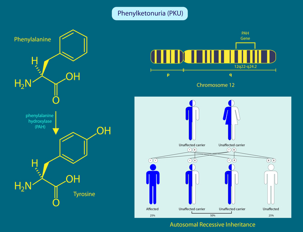 Phenylketonuria Symptoms Dealing with Ph...